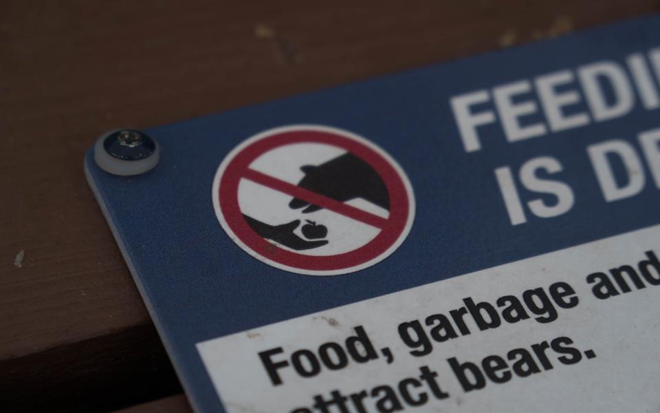 Bärenland Tipps im Umgang mit Bären