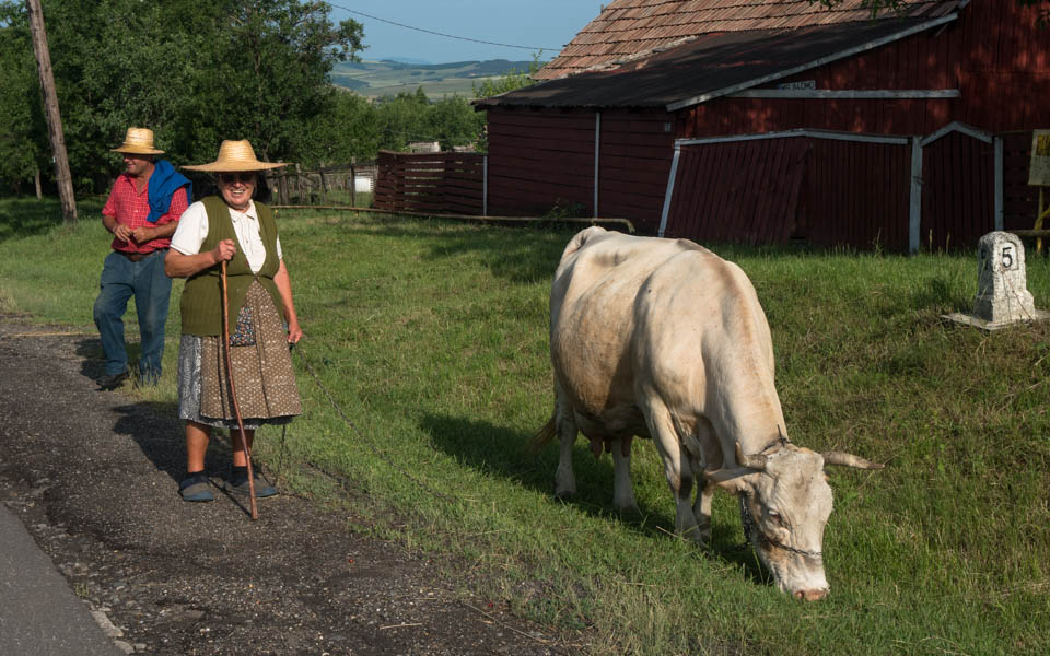 Von Hühnern und Hügeln in Rumänien – Galerie