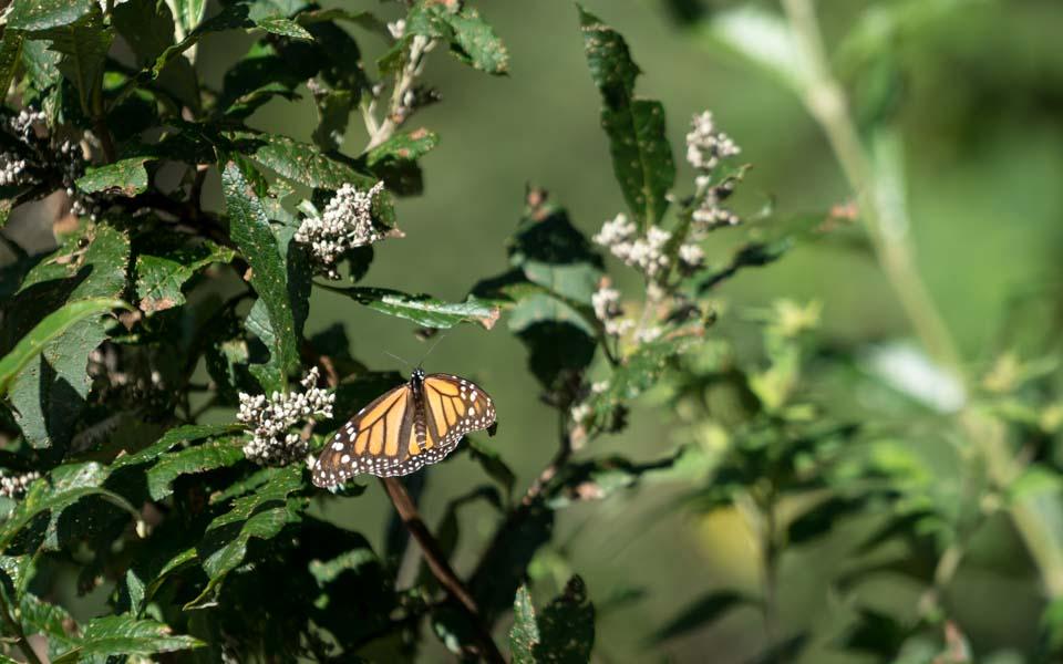 Hundertausend Schmetterlinge