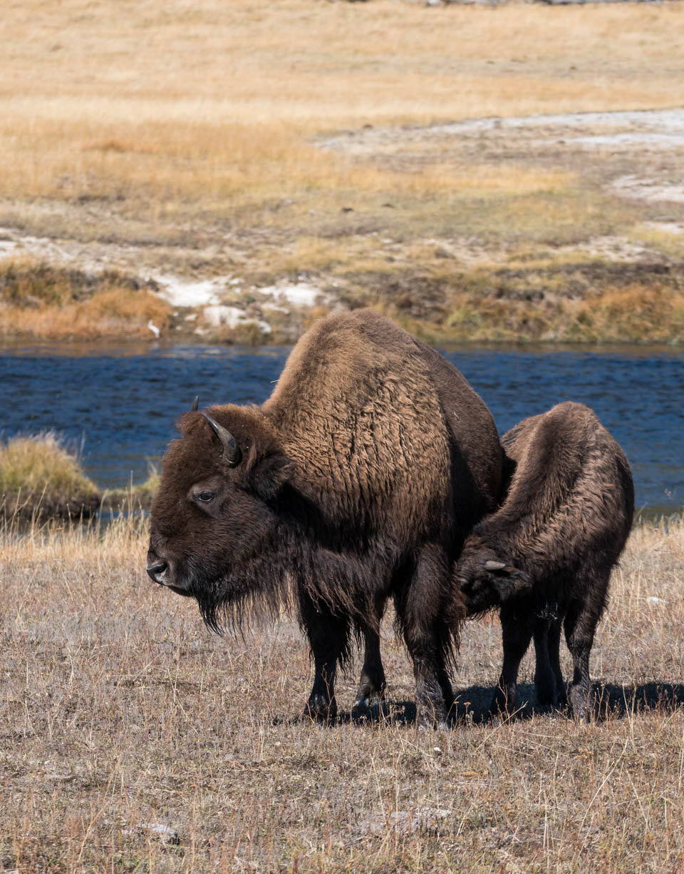 Almost winter at Yellowstone – Gallery